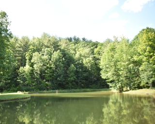 Woods and pond in Oneonta 1