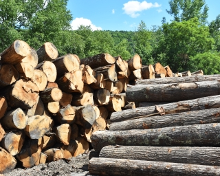 Log pile at Wightman lumber 1